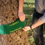 10099_Tree Wear_1.2